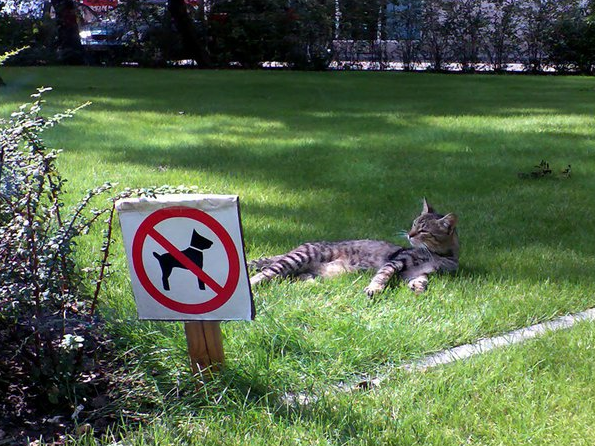 Opportunities... to relax without dogs! (n_n)