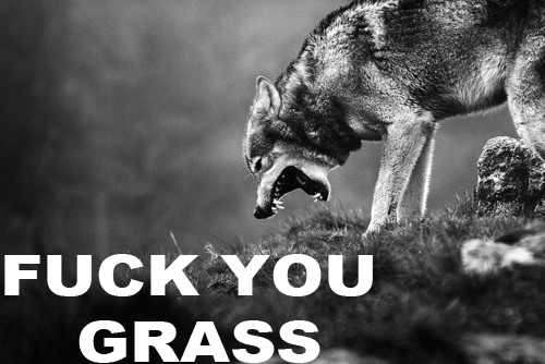 FUCK YOU GRASS