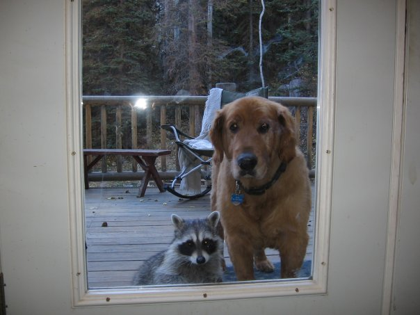 I dont know if your new friend can come in...