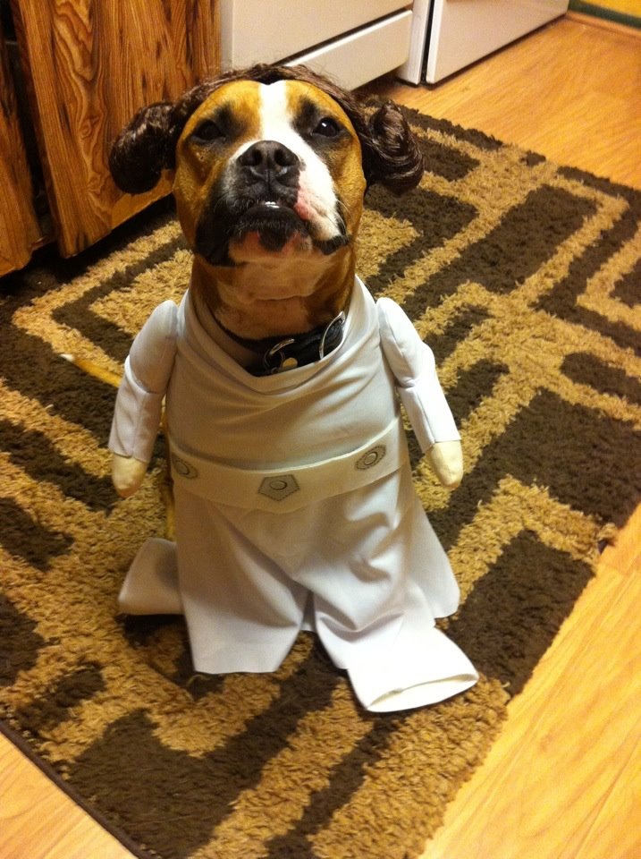 Princess Leia costume... well an hairy Princess Leia :P