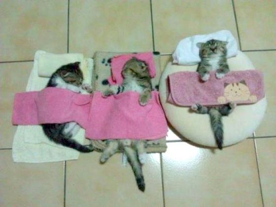 Caturday Sleep-Over (Because i couldn't resist the one on the right lool)