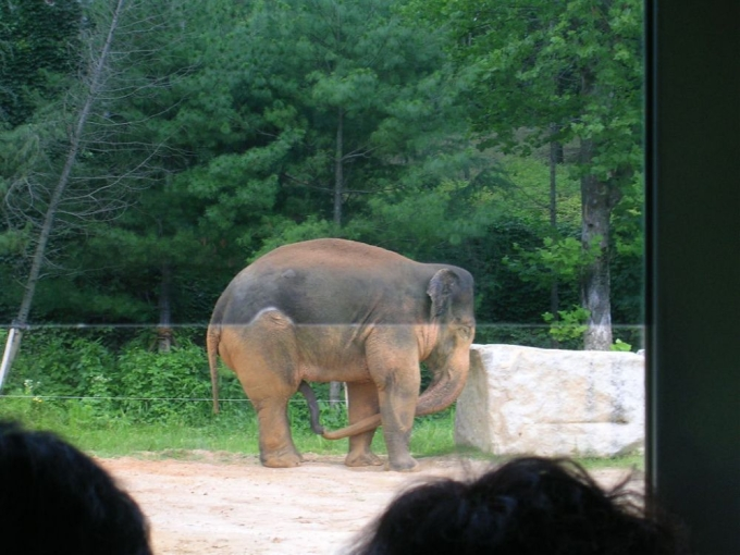 Dumbo what are you doing ?!? 0_0