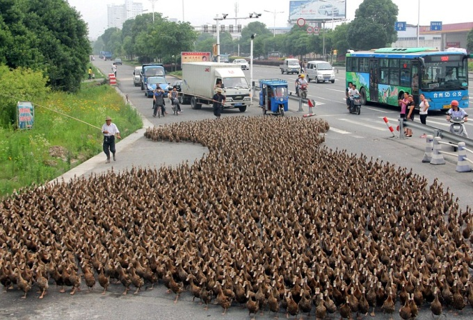 Holy... Ducks ?!! 0_o