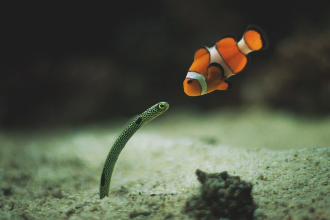 I'm looking for my son, Nemo (^_^)'/
