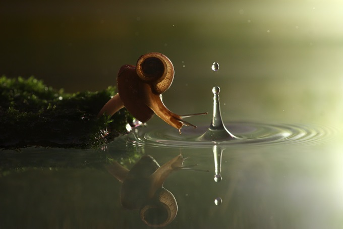 Snail and the Drop of Rain 