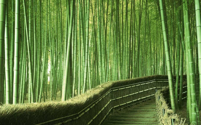 Walking path in a Bamboo Forest in Kyoto, Japan (^-^)/