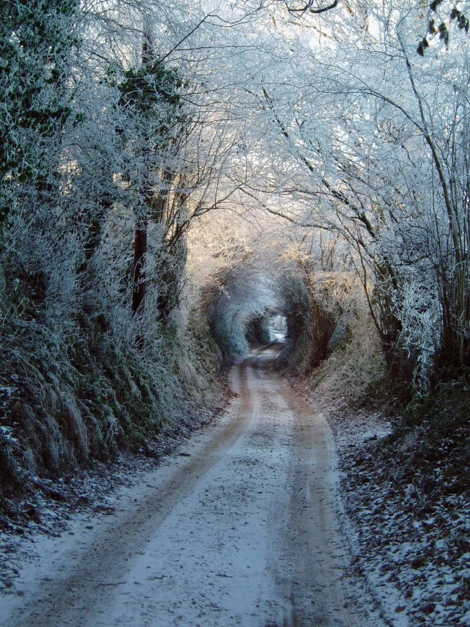 The winter magical path (*°∀°)/