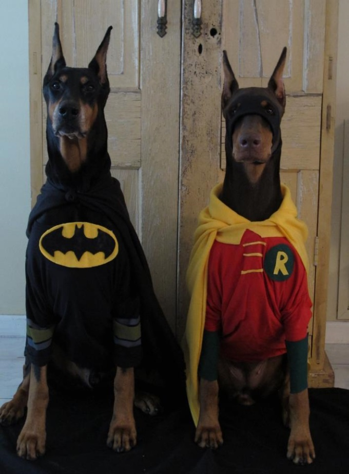Bark Knight Rises (≧∇≦)/