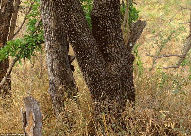 There is a leopard in this picture ¯\(°_o)/¯