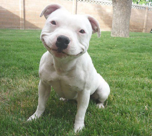 Tuesday Smiling dog <img mce_tsrc=