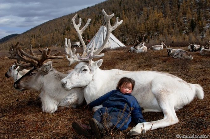 Sleeping With Reindeers (^▽^)
