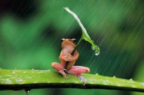 Froggy Umbrella