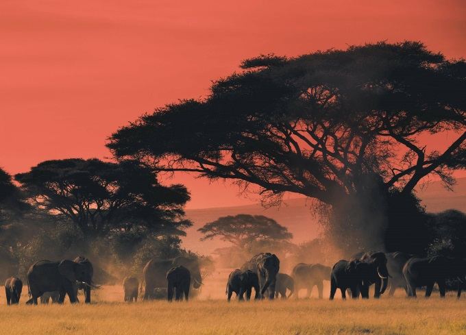 At the end of the day on the plains of Africa (n_n)/