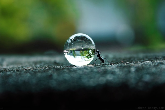 Ant pushing water droplet ヾ(⌒ー⌒)ノ