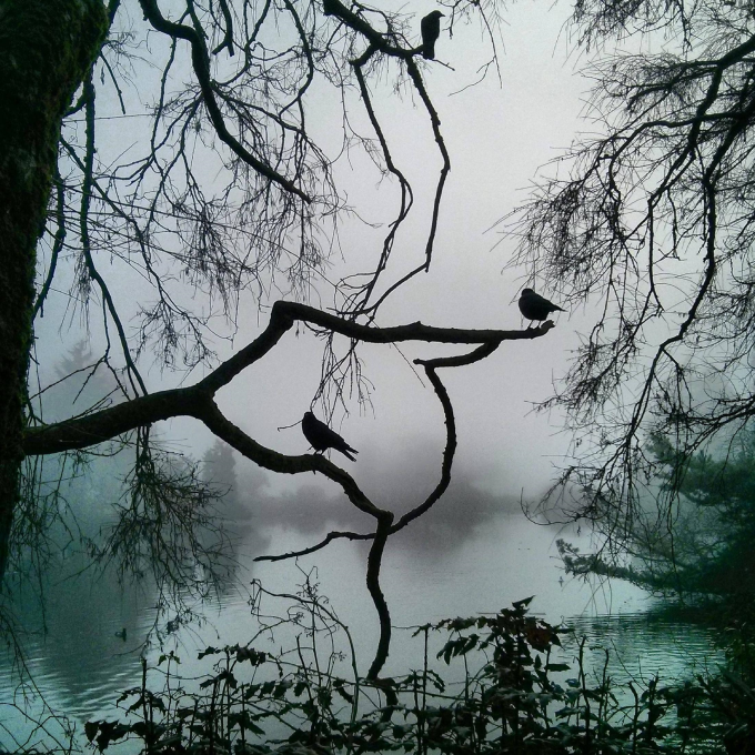 Beautiful fog picture from Vancouver, feels like an Edgar Allen Poe stories