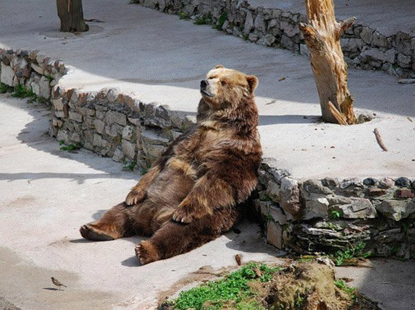 The bear that can't beleive it's Friday (o_o)/