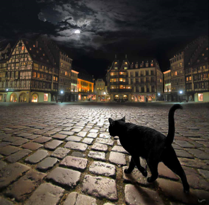 Stray cat in Strasbourg  ヽ(´ー`)
