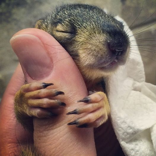 Baby squirrel hug :)