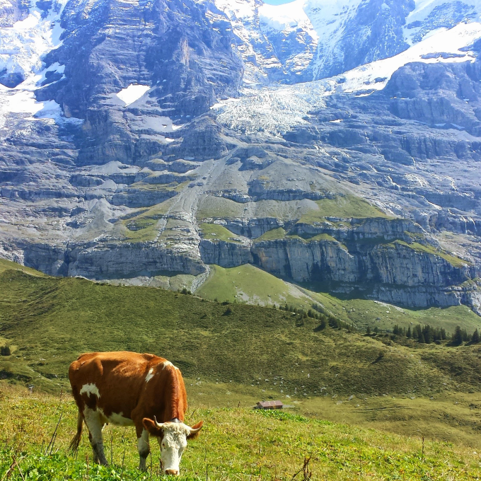 This cow has no idea how good of a view he has. (ーー;)