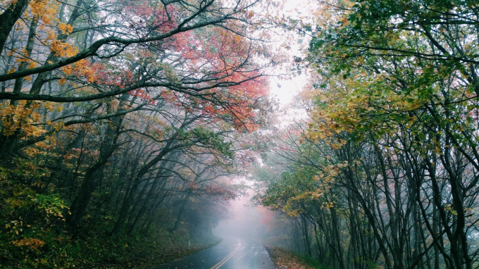 The mystical autumn road (; ̄ェ ̄)