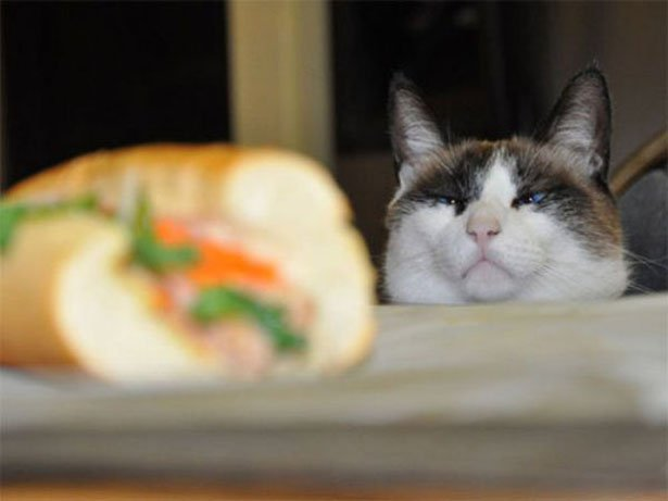 Soon sandwich, you will be mine ʕ•ᴥ•ʔ