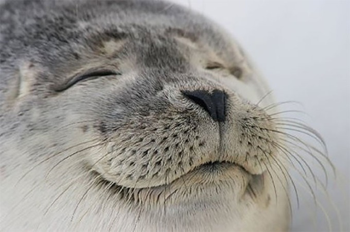 Satisfied seal :3 :)