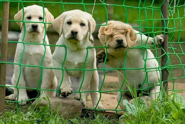 The three degrees of curiosity ʕ•ᴥ•ʔ ʕ•ᴥ•ʔ ʕ•ᴥ•ʔ