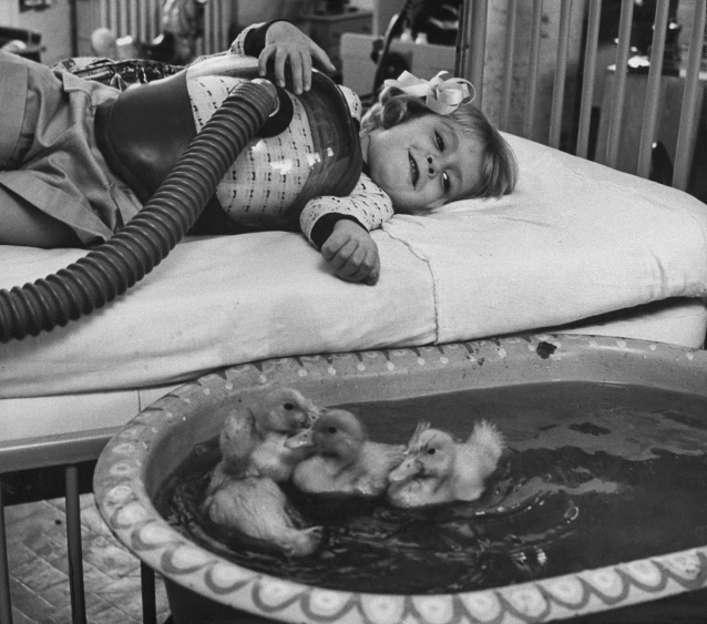 The introduction of animals to therapy 1956 ^_^