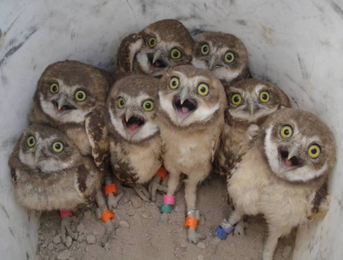 Excited owls (O_O)