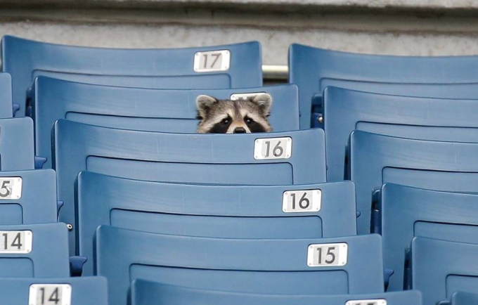 I just came here for the Baseball ʕ•ᴥ•ʔ