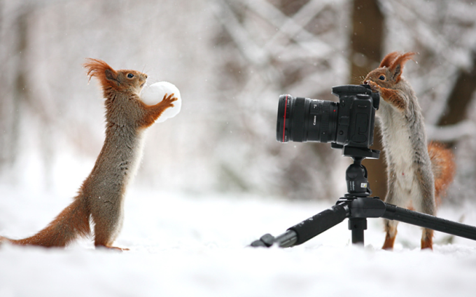 A squirrel poses with a snowball while another makes sure to capture the moment on camera ^_^
