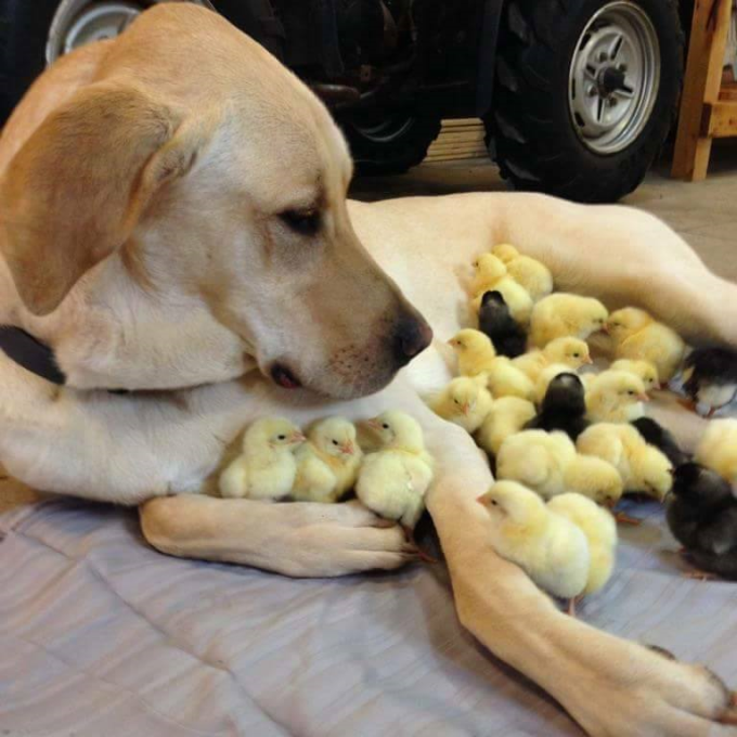 Chick magnet :P