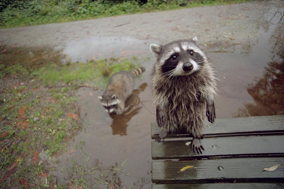 Do you mind if we play in your puddle? :3