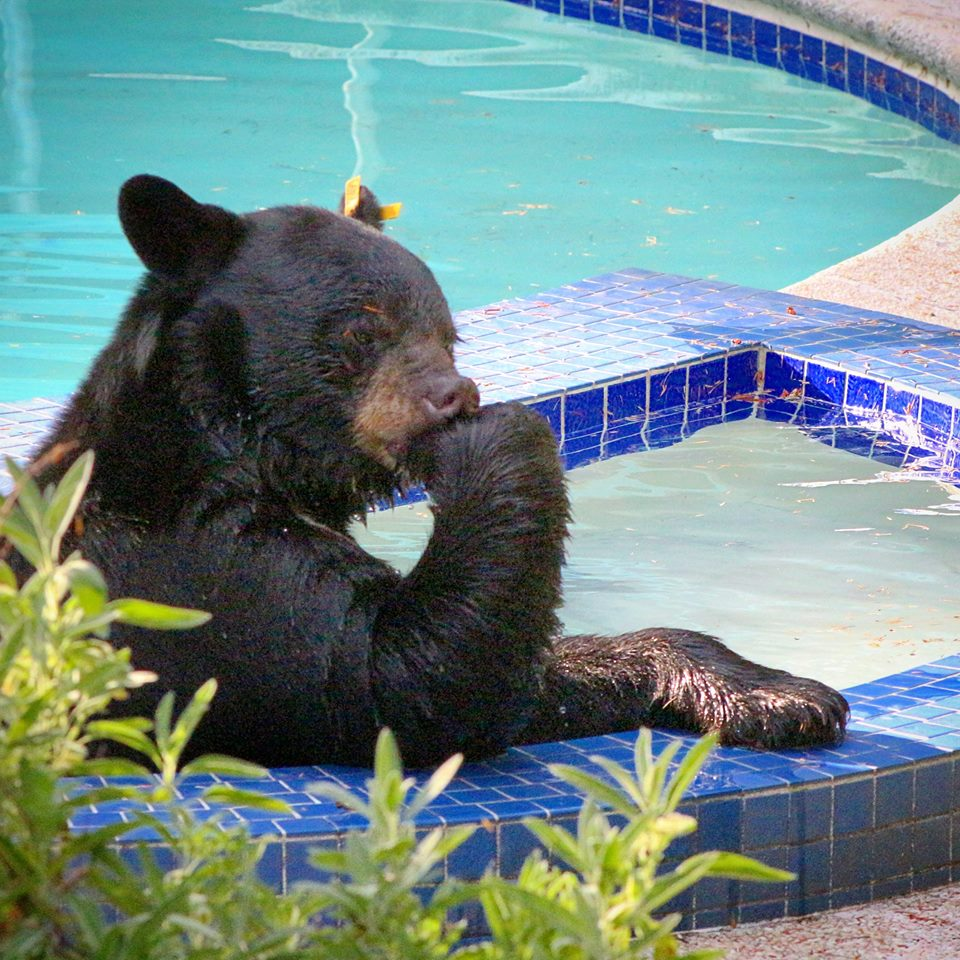 A bear deep in thought :P