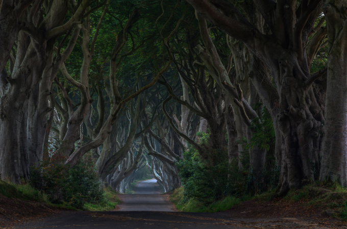 The dark hedges, Ireland ⋋╏ ❛ ◡ ❛ ╏⋌
