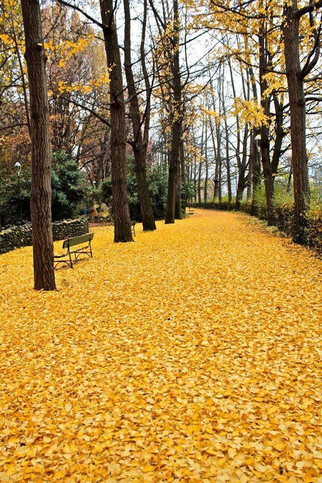 These fallen leaves look like Oz ╰(◕ᗜ◕)╯