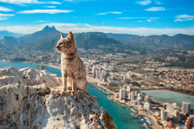 A cat sits majestically over the Spanish town of Calp (◕ᴥ◕)