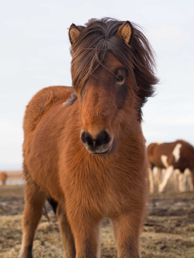 This horse has beautiful hair :P
