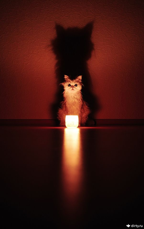 A cat and a lamp (◕ᴥ◕)