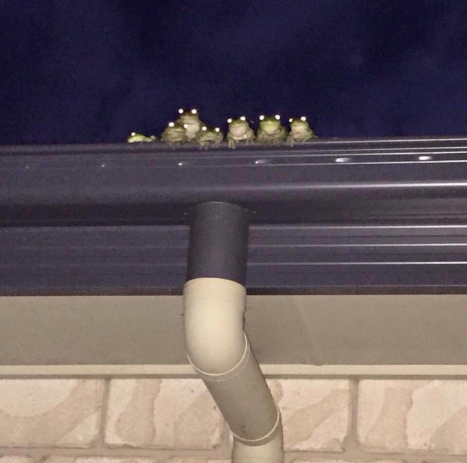 You never know when a frog family is watching you o_O
