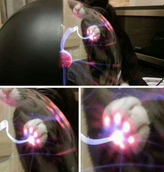 This is what Happens When A Cat Touches A Plasma Ball :P