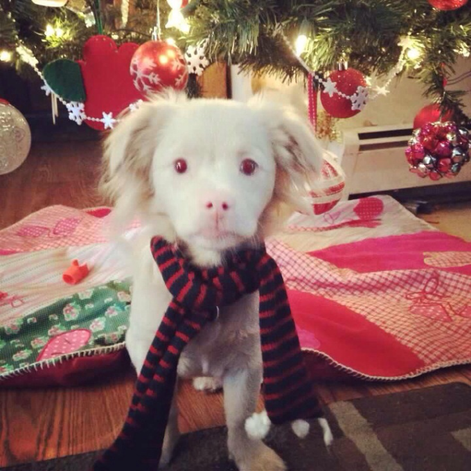This albino puppy looks like Falcor from The Neverending Story ^_^