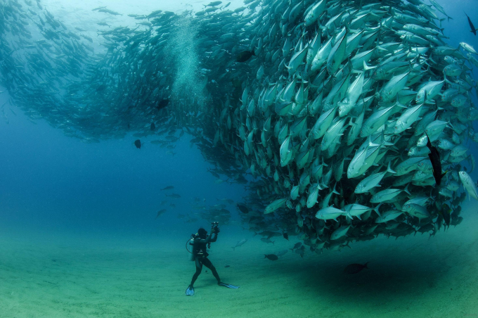 That moment when a school of fish comes to you :P