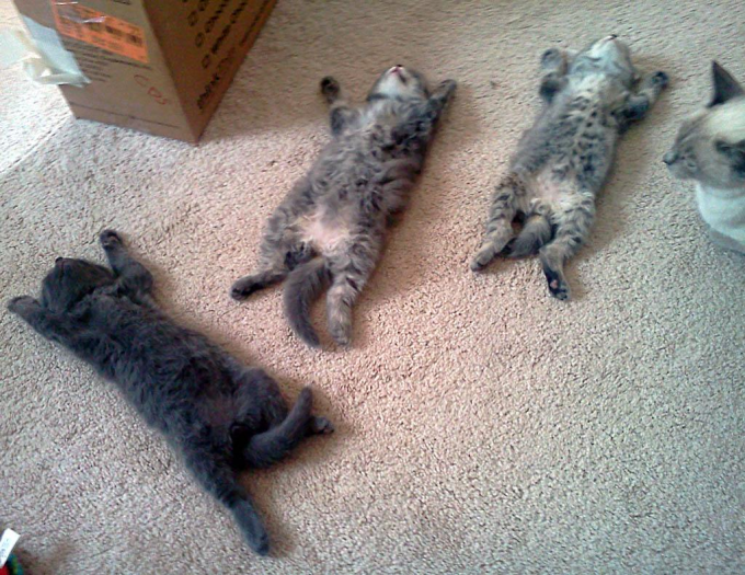 Three little kittens, all conked out :P
