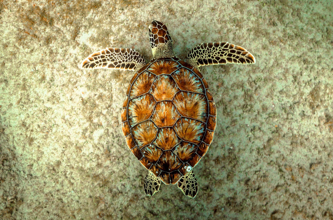 Turtles are amazingly beautiful creatures ^_^
