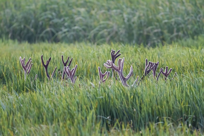 Deer 'Secret Meeting' ;)