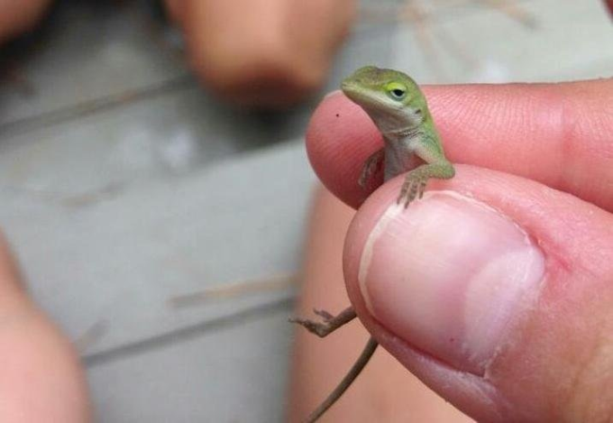 The little and chilling lizard :P