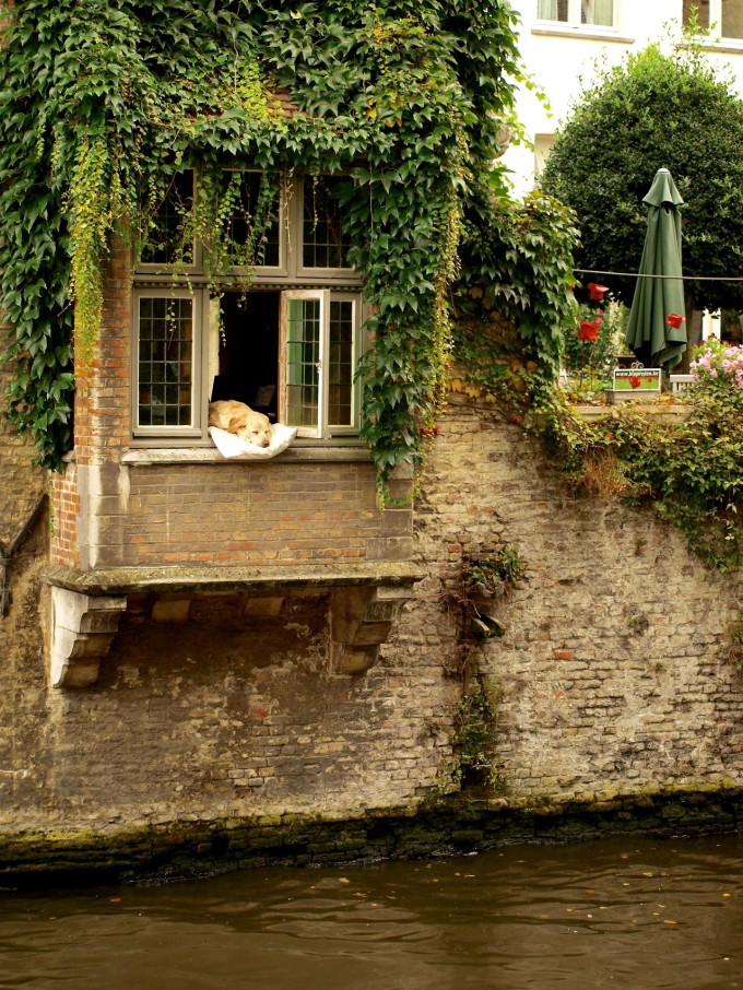 Dog taking a nap in Bruges, Belgium