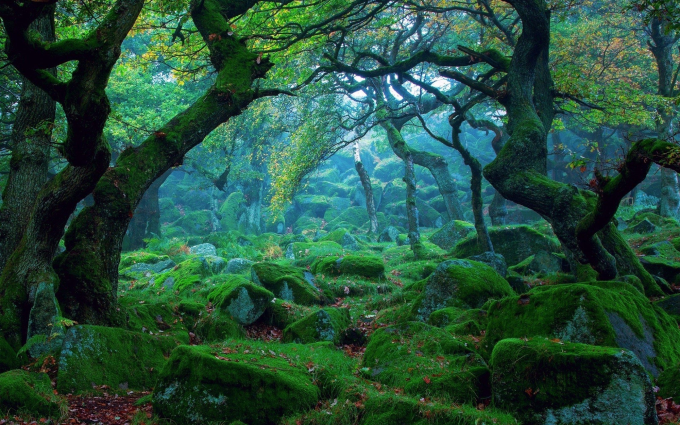 Sherwood Forest, England :O