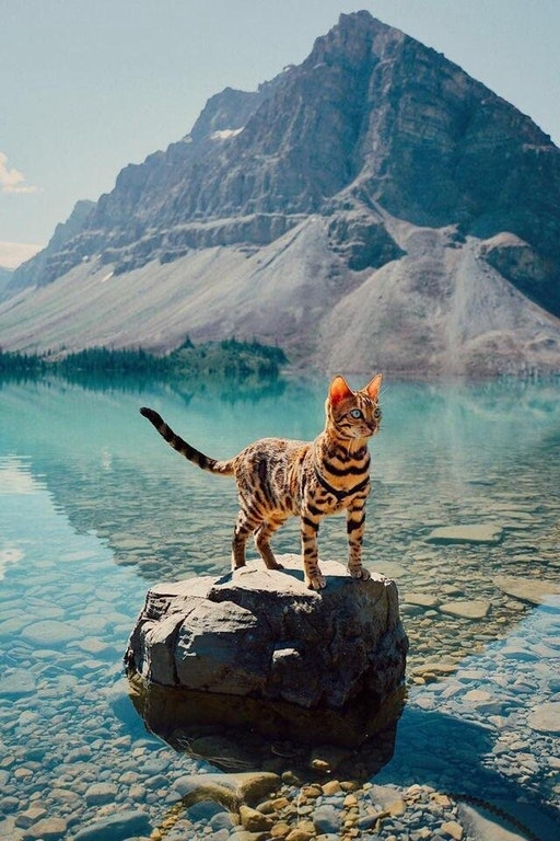 Bow lake and cat :P